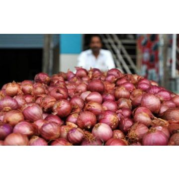 Normal Onion - 20 Kg - KHOLA