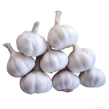 Garlic (Indian) - 1 kg