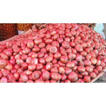 Fresh Dashi Onion(পেঁয়াজ) -2kg - 5Onion